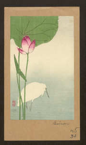 White Heron And Lotus. Image