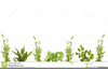 Free Vegetable Clipart Borders Image