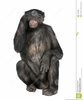 Monkeys And See No Evil And Clipart Image