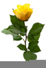 Free Yellow Rose Clipart Image