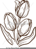 Free Black And White Tulip Clipart Image
