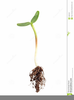 Seed Growing Clipart Image