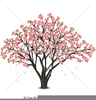 Japanese Cherry Blossom Clipart Image