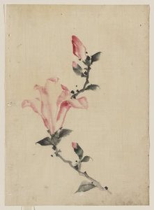 [large Pink Blossom On A Stem With Three Additional Buds] Image