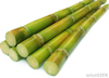 Stack Of Sugar Cane Image
