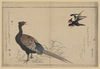 Swallows And Pheasant. Image
