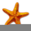 Free Starfish Clipart Images Image