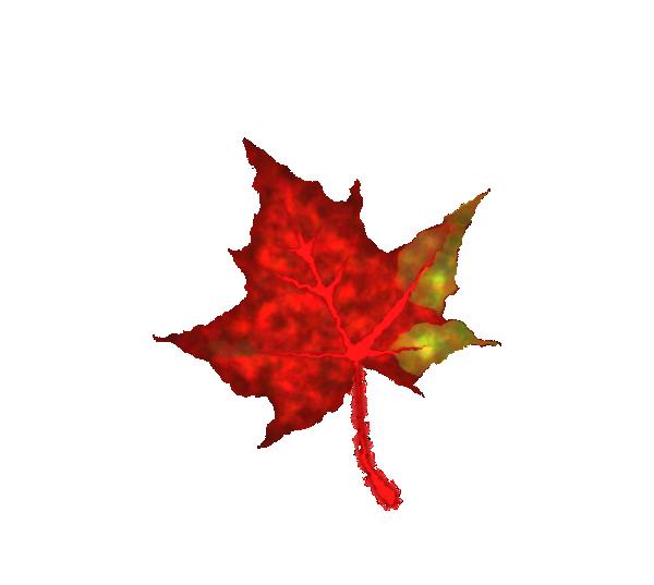 clip art for autumn leaves - photo #25