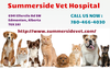 Professional Veterinary Care Services Summerside Vet Hospital Image