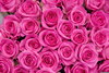 Pink Roses Pictures Image