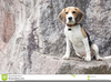 Beagle Howling Clipart Image