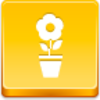 Free Yellow Button Pot Flower Image