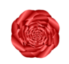 Red Rose Image
