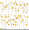 Yellow Rose Clipart Image