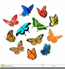 Animated Butterflies Clipart Free Image
