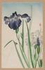 Irises Image