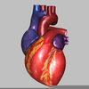 The Human Heart Clipart Image