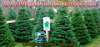 Christmas Trees Salt Lake Image