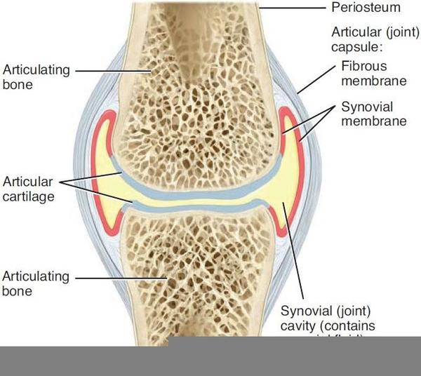 Joint Capsule Diagram