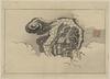 Chinese Lion Dog. Image