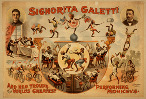 Signorita Galetti And Her Troupe Of The World S Greatest Performing Monkeys Image