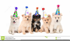Dog Party Hat Clipart Image