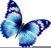 Black And White Butterfly Clipart Image