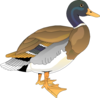 Walking Duck 2 Clip Art