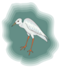 Heron With Green Background Clip Art