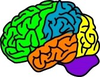 Vector Illustration For A Anatomy Brain In Separate Color Image