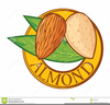 Almond Clipart Free Image
