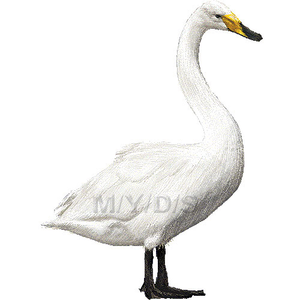 Transparent Swimming Clip Art - Swan Clipart Free , Free Transparent Clipart  - ClipartKey