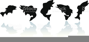 Bass Fish Vector Clipart Image
