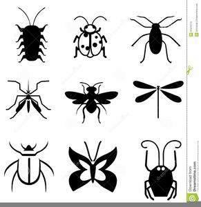 Bug Clipart Life Image