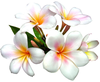 Clipart Of Bunch Of Flowers Image