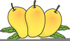 Free Clipart Of Mangoes Image