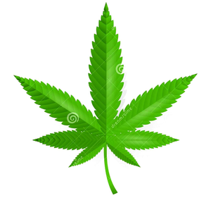 Cannabis Leaf Icon Image