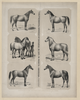 The Principal Breeds Of Horses In Use In North America Dedicated To The Friends And Admirers Of The Horse / Drawn From Life, Lith D & Pub D By A. Kollner. Image