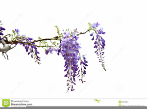 Wisteria Border Clipart | Free Images at Clker.com ...