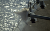 A 54 Caliber Round Fires From The Barrel Of Of Mccain S Five-inch Gun During Naval Shore Fire Support Of An Amphibious Attack On Shoal Water Bay Training Area (swbta) As Part Of Exercise Tandem Thrust 01 Image