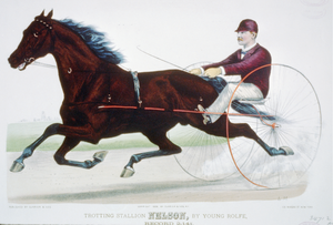 Trotting Stallion Nelson, By Young Rolfe: Record 2:14 1/4 Image