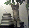 Cat 30 Image