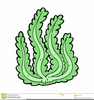 Animated Seaweed Clipart Image