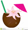 Tropical Drink Clipart Images Image