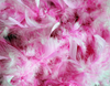 Pink Feathers Background Image