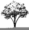 Clipart Of Trees In The Fall Image