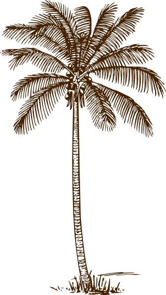 Line Drawing Palm Tree : Palm tree clip art at clker vector online