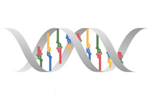 Genetics Clipart | Free Images at Clker.com - vector clip ...