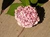 Flower 65 Image