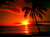 Clipart Sunsets Palm Trees Image